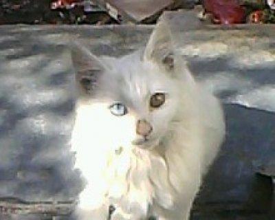 قطه نادره