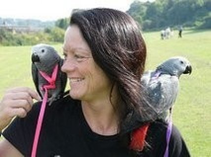 Lovely African Grey Parrots Ready For A New Home
