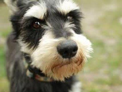 Please Help Me Find My Dog Benji