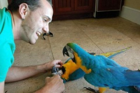 صور Young and talking macaw parrots for rehoming. 1