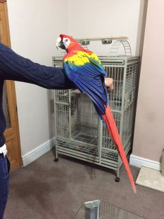 Stunning Scarlet Macaw
