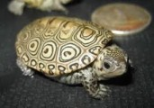 very lovey,charming home raised Turtles  for sale.   contact me