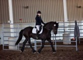 AMAZING AND ENERGETIC FRIESIANT HORSE FOR SALE...